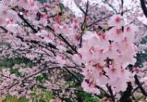 お花見♪♪