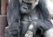 類人猿分類セミナーに参加してきました!!