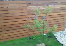 庭のニンジン